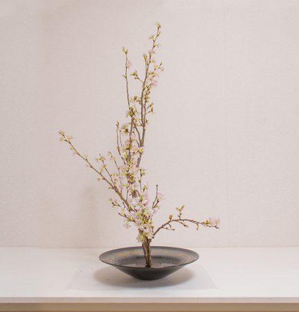 生花正風体一種生-桜-